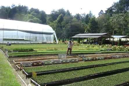 Aloas con su nuevo invernadero en piedras blancas epm for Viveros medellin